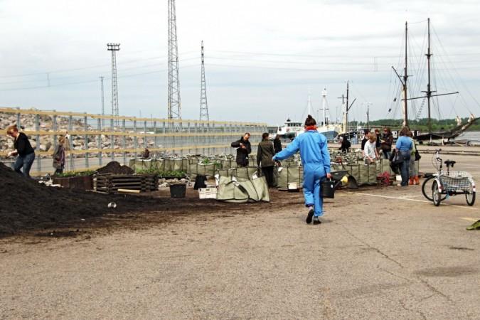 In 2010, Dodo activists built a public urban garden in Kalasatama, where people could rent grow bags.
